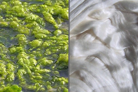 Silk-Alginate Composite Scaffolds Show Excellent Potential for Soft Tissue Engineering