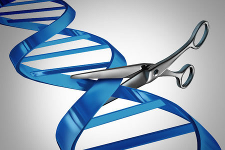 CRISPR-Cas9 Used to Decelerate Aging Process in Mice with Hutchinson–Gilford Progeria Syndrome
