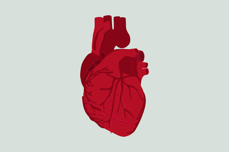 Stem Cells Used to Generate Epicardium Cells to Repair Heart Damage