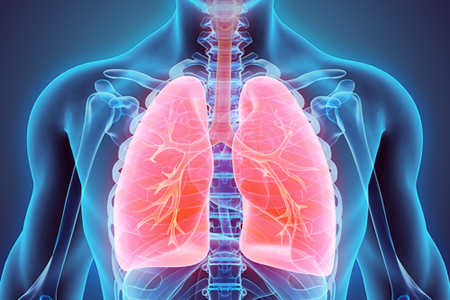 Molecule Identified that Helps Maintain Balance of Stem Cells and Mature Lung Cells