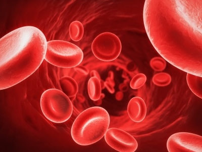 UCL Researchers Increase HSCs in Cord Blood to Improve Transplant Potential