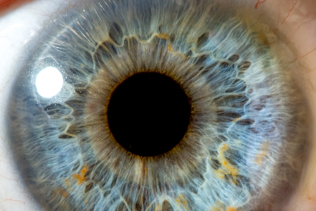 Human Brain Organoids Develop Light-Sensitive Bilateral Optic Vesicles