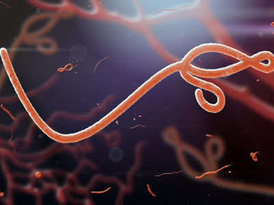 Researchers Discover Human Protein That Inhibits Ebola Virus Replication