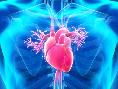 Researchers Create Functional Miniature Human Hearts from Stem Cells