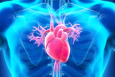 Researchers Directly Induce Cardiogenesis In Vivo Raising Hopes for Human Adult Heart Tissue Regeneration