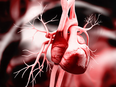 New Research Reveals Stem Cardiac Cell Therapies Work in an Unexpected Way