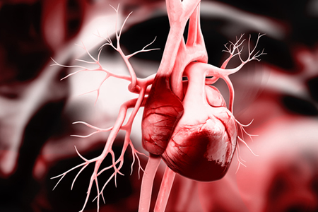 Treatment Prevents Heart Failure in Mice Following Myocardial Infarction