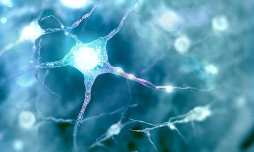 Researchers Rejuvenate Dormant Stem Cells in Aging Brains