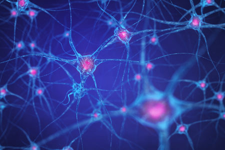 Researchers Shed Light on Mechanisms Involved in Brain Stem Cell Activation