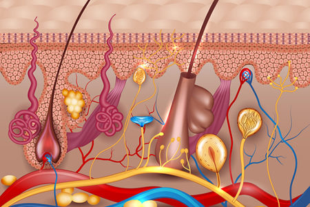 Researchers Show Melanoma Can Originate in the Hair Follicles