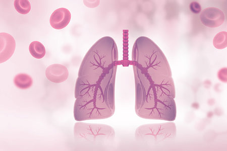 Fully Functional Lungs Grown in Mice from Donor Pluripotent Stem Cells