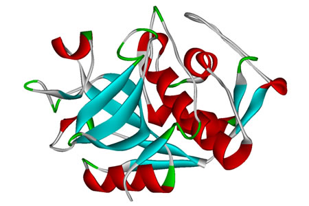 Researchers Shed Light on Cathepsin Interactions and Develop Tool to Model System Activity