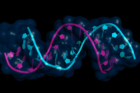 CRISPR Used to Knock Down Maternal and Zygotic mRNA and Study Gene Messages in Early Development
