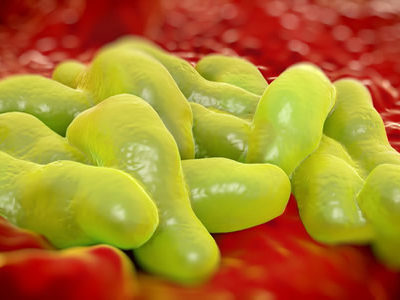 Molecular Mechanism of Bacterial Adhesion to Gut Wall Identified